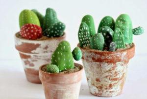 Cactus-Opanoma.nl