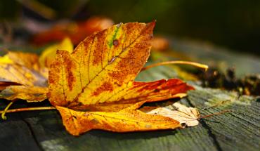 5 Herfstknutsels met bladeren