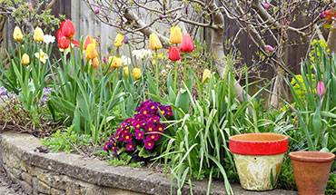 Wanneer plant je bloembollen?